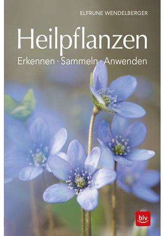 Buch »Heilpflanzen / Elfrune Wendelberger« kaufen