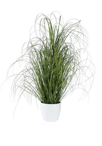 Deko - Pflanze Grasbusch kaufen