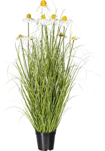 Creativ green Kunstpflanze »Grasbusch« kaufen
