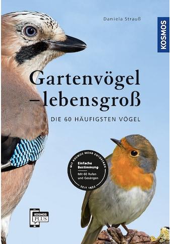 Buch »Gartenvögel lebensgroß / Daniela Strauß« kaufen