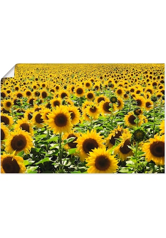 Artland Wandbild »Sonnenblumenfeld« kaufen