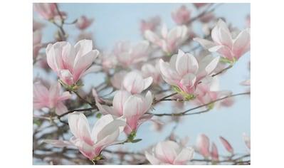 Komar Fototapete »Magnolia«, bedruckt-Wald-geblümt, ausgezeichnet lichtbeständig kaufen