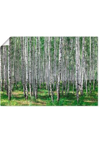 Artland Wandbild »Birkenwald« kaufen