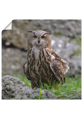 Artland Wandbild »Uhu«, Vögel, (1 St.), in vielen Größen & Produktarten - Alubild /... kaufen
