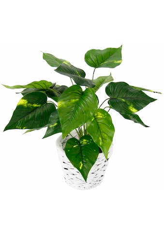 I.GE.A. Kunstpflanze »Pothospflanze in Wasserhyazinthentopf« (1 Stück) kaufen