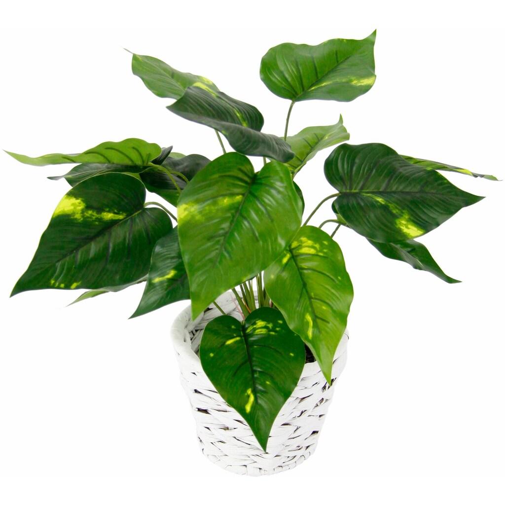 I.GE.A. Kunstpflanze »Pothospflanze in Wasserhyazinthentopf«