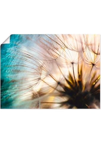 Artland Wandbild »Pusteblume Makro abstrakt«, Blumen, (1 St.), in vielen Größen &... kaufen