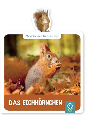 Buch »Das Eichhörnchen / Hannah Kastenhuber« kaufen