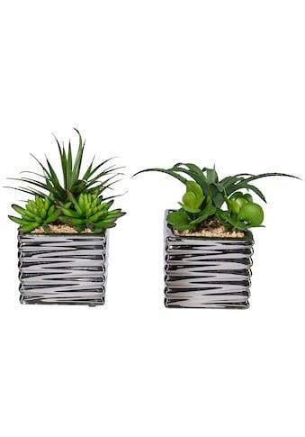 Creativ green Kunstpflanze »Sukkulenten« (Set, 2 Stück) kaufen