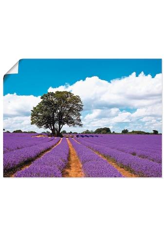 Artland Wandbild »Schönes Lavendelfeld im Sommer« kaufen
