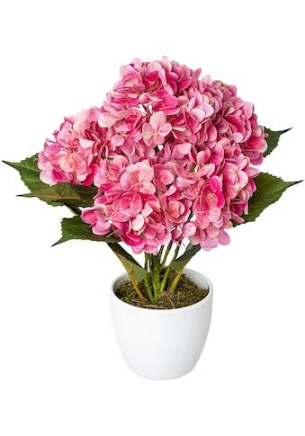 Creativ green Kunstpflanze »Hortensie«, im Keramiktopf kaufen