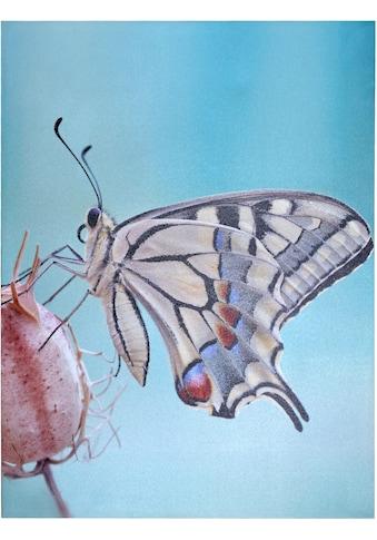 Home affaire LED - Bild »Schmetterling« kaufen