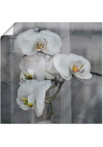 Artland Wandbild »Weisse Orchideen  -  white Orchid« kaufen