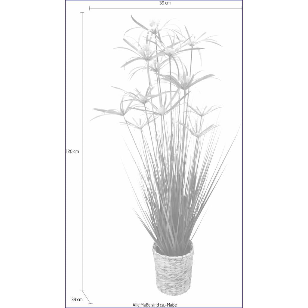 I.GE.A. Kunstpflanze »Zyperngras in Wasserhyazinthentopf«