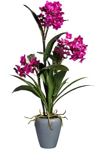 Creativ green Kunstorchidee »Dendrobie«, in Keramikvase kaufen