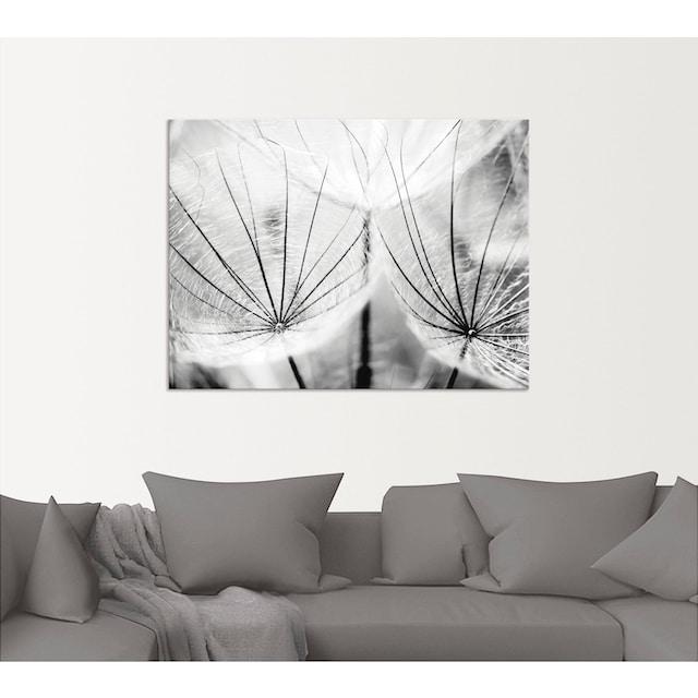 Artland Wandbild »Pusteblume in schwarzweiß«