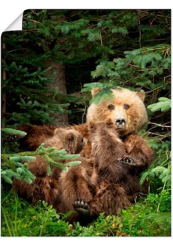 Artland Wandbild »Bären beim Spielen IV«, Wildtiere, (1 St.), in vielen Größen &... kaufen