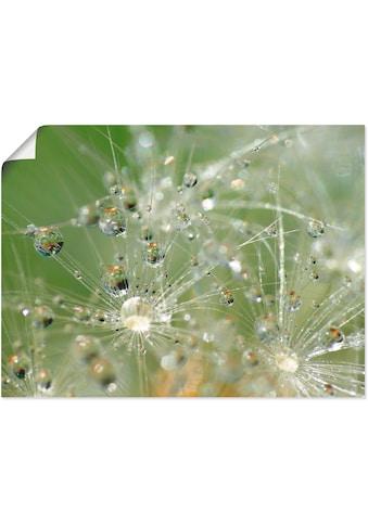 Artland Wandbild »Wassertropfen Pusteblume«, Blumen, (1 St.), in vielen Größen &... kaufen