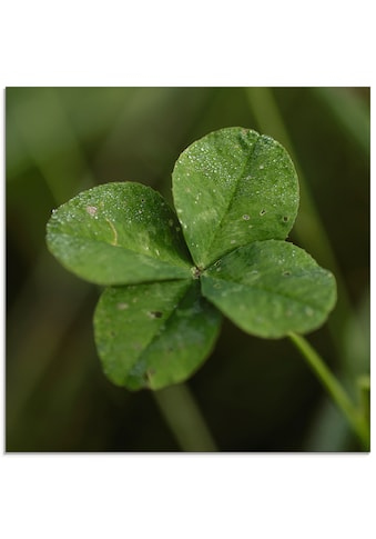 Artland Glasbild »Kleeblatt«, Blätter, (1 St.) kaufen
