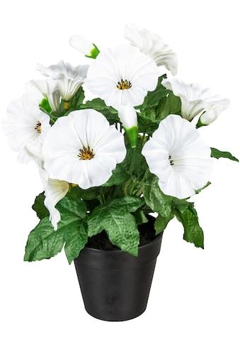 DELAVITA Künstliche Zimmerpflanze »Stever« kaufen