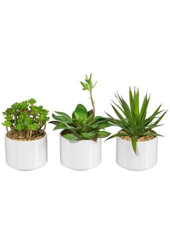 Creativ green Kunstpflanze »Sukkulenten« (Set, 3 Stück) kaufen