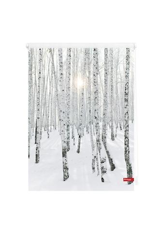 LICHTBLICK Seitenzugrollo »Klemmfix Motiv Birkenwald«, Lichtschutz, ohne Bohren,... kaufen