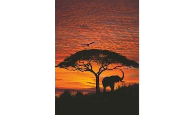 Komar Fototapete »African Sunset«, bedruckt-Wald, ausgezeichnet lichtbeständig kaufen