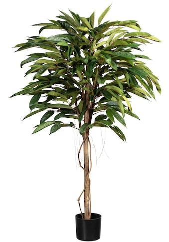 Creativ green Kunstbaum »Ficus Alii de Luxe« kaufen