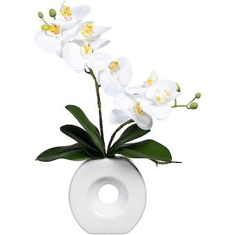 Jetzt Kunstorchideen kaufen online bei OTTO