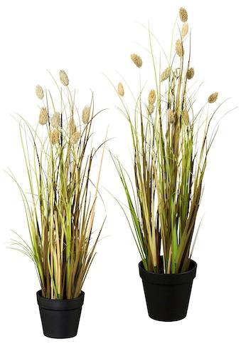 Creativ green Kunstgras »Lagurusgrasbusch« kaufen