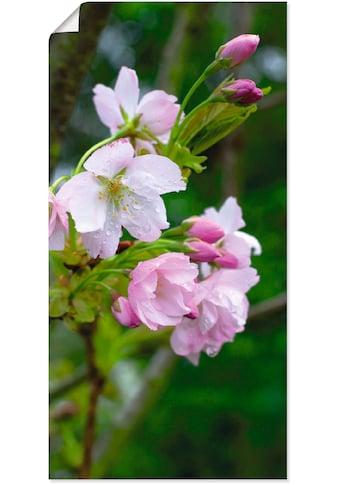 Artland Wandbild »Zweig einer blühenden Zierkirsche« kaufen