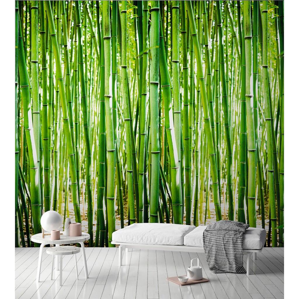 Andiamo Vliestapete »Bambus-Optik«, 1 Rolle á 3 Bahnen 159 cm x 280 cm