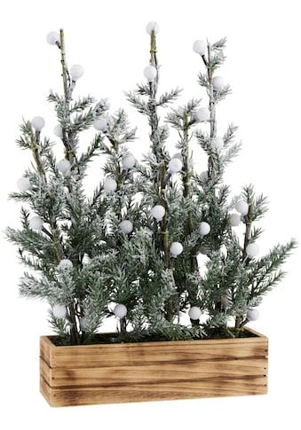 LED Baum »Tannenbäumchen«, bernsteinfarben, im dekorativen Blumenkasten kaufen