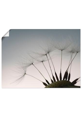 Artland Wandbild »Pusteblumen - Samen I« kaufen