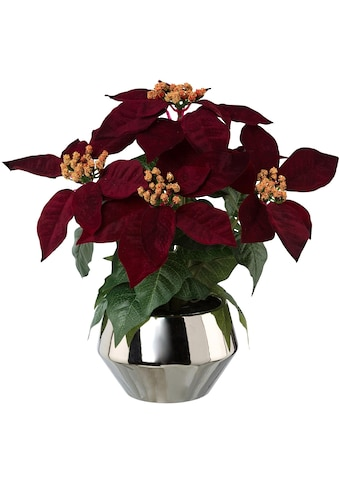 Kunstblume »Weihnachtsstern« kaufen