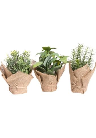 Botanic-Haus Künstliche Zimmerpflanze »Kräuter« kaufen