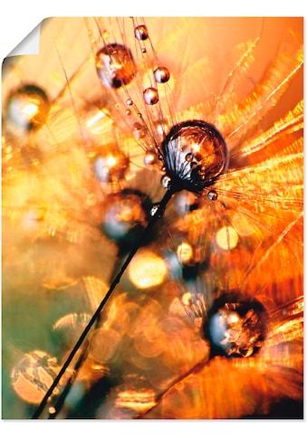 Artland Wandbild »Pusteblume Energy« kaufen
