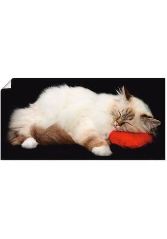 Artland Wandbild »Müde Katze«, Haustiere, (1 St.), in vielen Größen & Produktarten -... kaufen