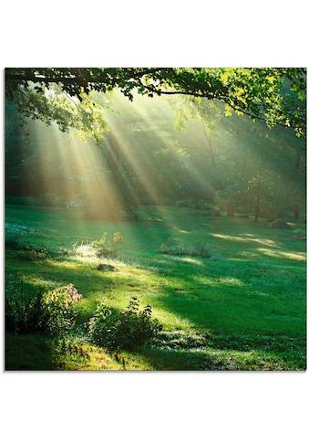 Artland Glasbild »Lichtkegel«, Wald, (1 St.) kaufen