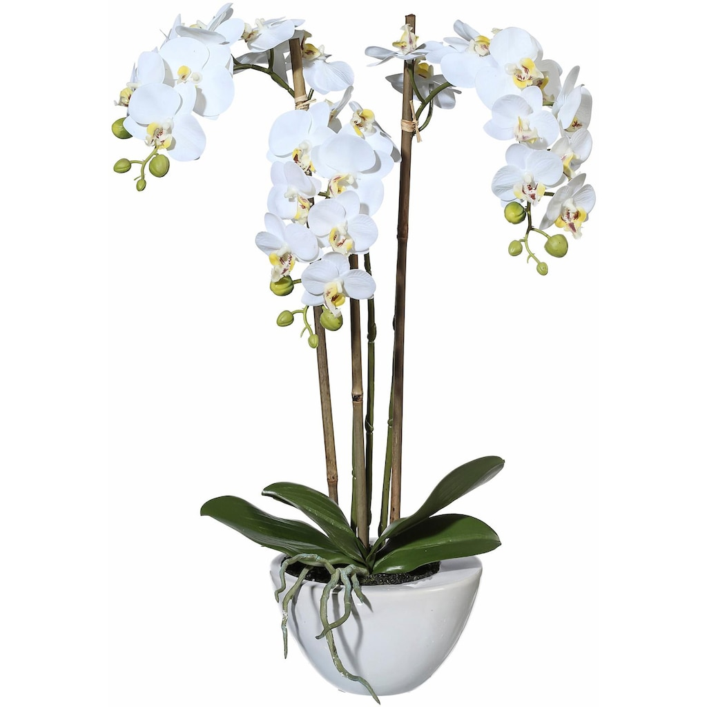 Creativ green Kunstpflanze »Mini Orchidee«