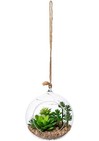 Creativ green Künstliche Zimmerpflanze »Sukkulenten-Mix mit LED-Beleuchtung«,... kaufen