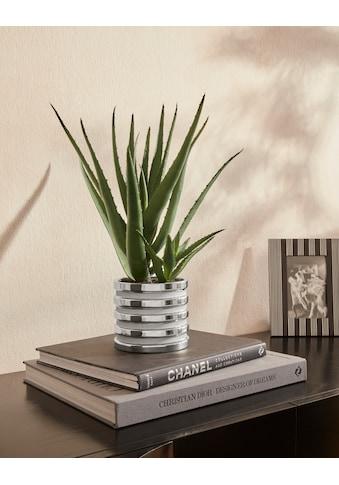 Guido Maria Kretschmer Home&Living Kunstpflanze »Auvergno« kaufen