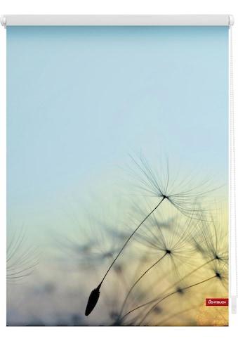 LICHTBLICK ORIGINAL Seitenzugrollo »Klemmfix Motiv Pusteblume«, Lichtschutz, ohne... kaufen