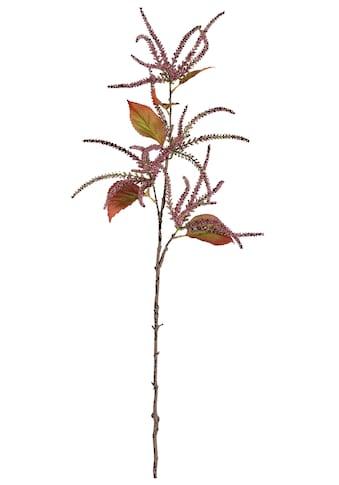 Kunstzweig »Amaranthus« (Set, 2 Stück) kaufen