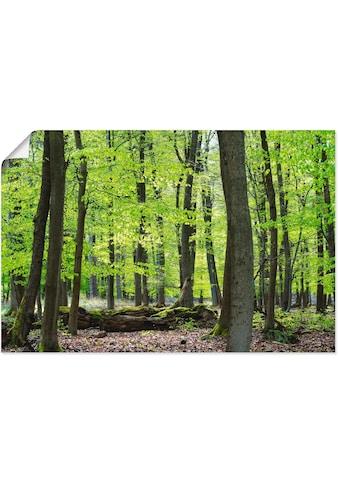 Artland Wandbild »Laubwald im Frühjahr« kaufen