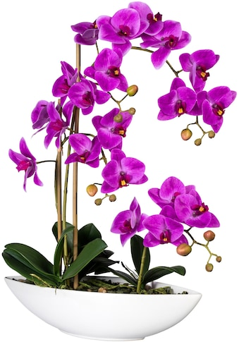 Creativ green Kunstorchidee »Phalaenopsis«, im Keramikschiff kaufen