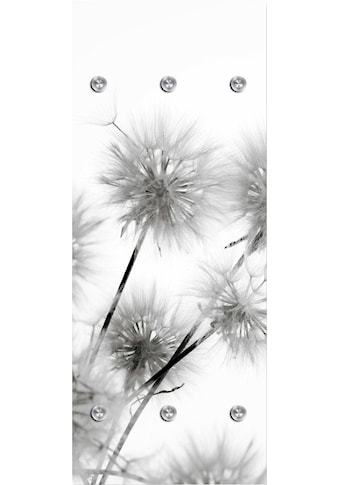 queence Garderobenpaneel »Pusteblumen«, mit 6 Haken, 50 x 120 cm kaufen
