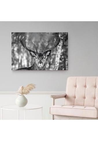 Holzbild »Deco Panel 60x90 Winter Deer« kaufen
