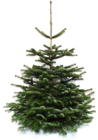 """Weihnachtsbaumland Echter Weihnachtsbaum """"Echte Premium - Nordmanntanne"""", (Nordmanntanne kaufen"""