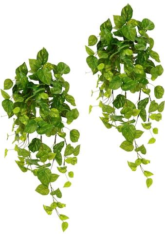 I.GE.A. Kunstpflanze »Pothoshänger« (2 Stück) kaufen